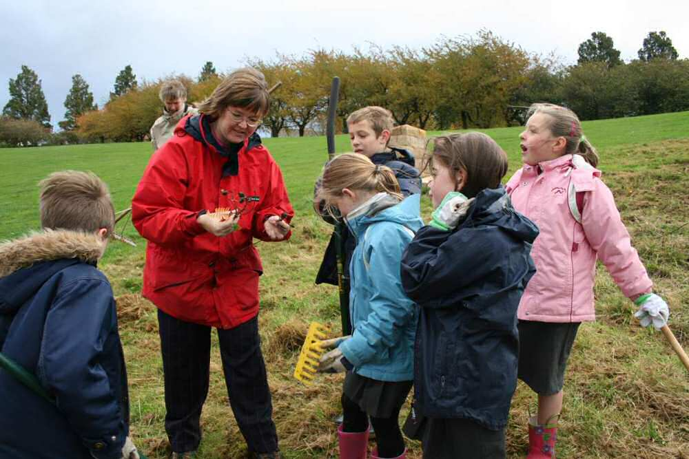 Explaining how to recognise the species of wildflowers