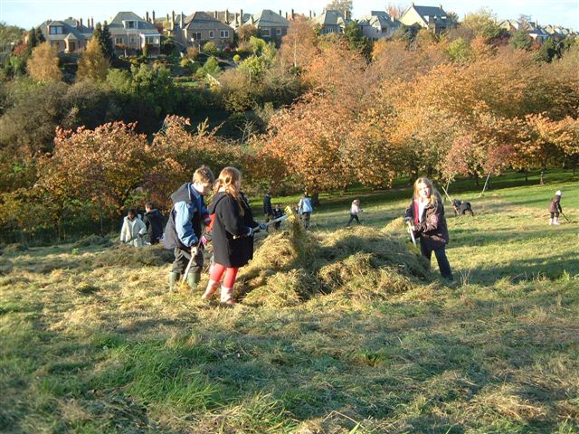 The annual autumn cut of the wildflower meadow 2006