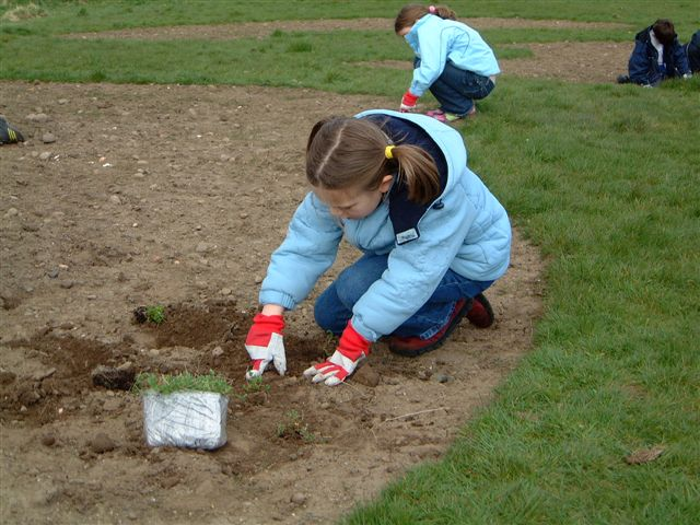 Wildflower plug plants are carefully planted April 2006