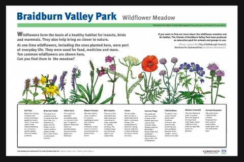 The interpretation panel to help identify wild flowers