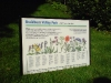 Wildflower Meadow Interpretation Panel