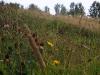 wildflower meadow Aug 2009