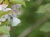 A green-veined-white butterfly