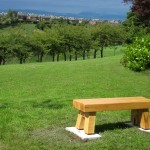 Cherry tree bench
