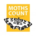 Moths Count